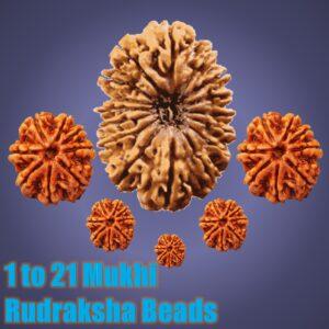 Rudraksha Beads: 1 to 21 Mukhi